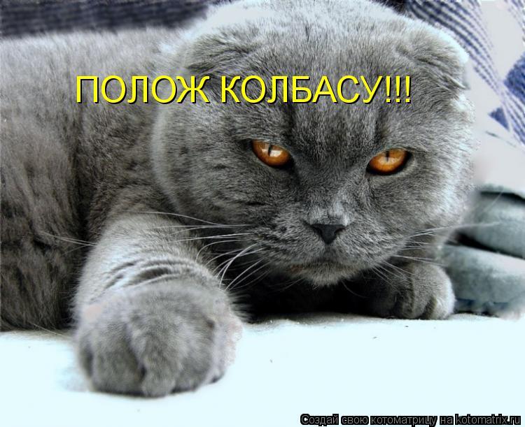 Котоматрица: ПОЛОЖ КОЛБАСУ!!!
