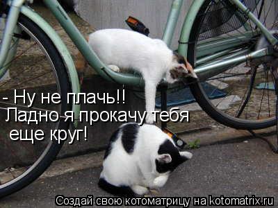 Котоматрица: - Ну не плачь!! Ладно я прокачу тебя еще круг!