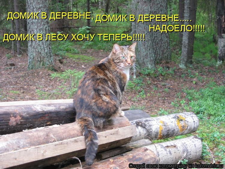 Котоматрица: ДОМИК В ДЕРЕВНЕ,  ДОМИК В ДЕРЕВНЕ..... НАДОЕЛО!!!!! ДОМИК В ЛЕСУ ХОЧУ ТЕПЕРЬ!!!!!
