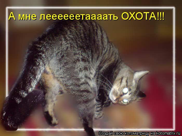 Котоматрица: А мне леееееетаааать ОХОТА!!!