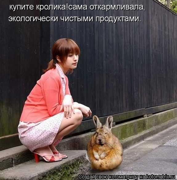 Котоматрица: купите кролика!сама откармливала, экологически чистыми продуктами.