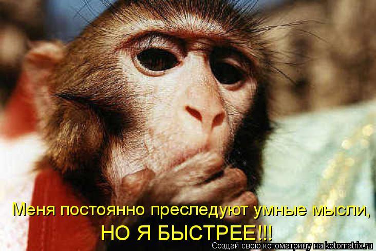 Котоматрица: Меня постоянно преследуют умные мысли, НО Я БЫСТРЕЕ!!!