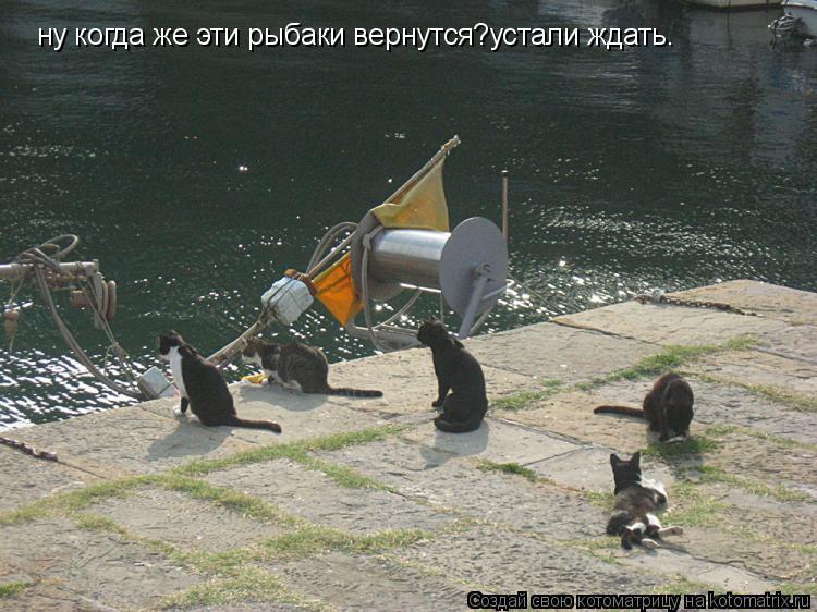 Котоматрица: ну когда же эти рыбаки вернутся?устали ждать.