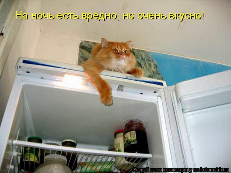 Котоматрица: На ночь есть вредно, но очень вкусно!