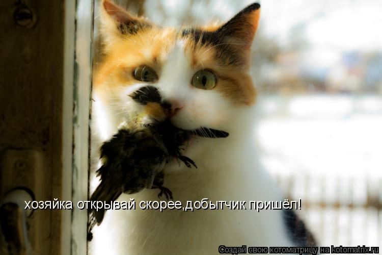 Котоматрица: хозяйка открывай скорее,добытчик пришёл!
