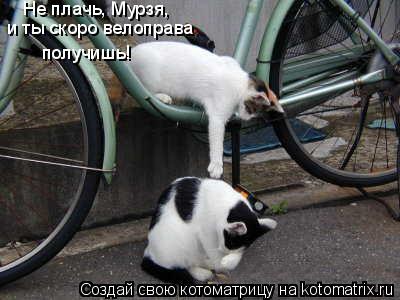Котоматрица: Не плачь, Мурзя, и ты скоро велоправа получишь!