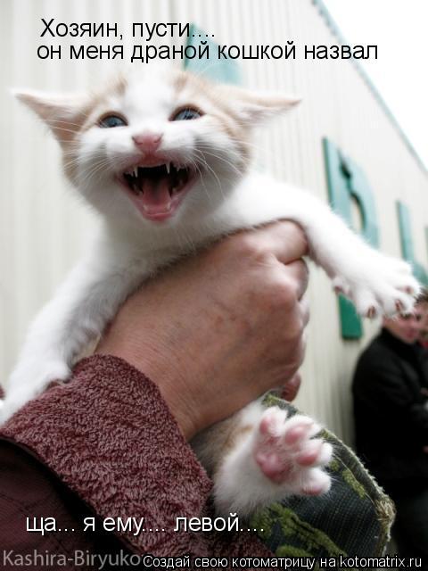 Котоматрица: Хозяин, пусти.... он меня драной кошкой назвал ща... я ему.... левой....