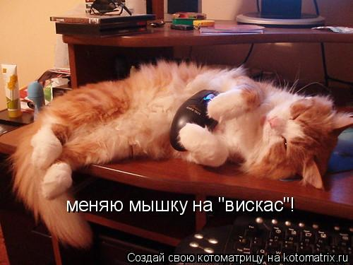 "Котоматрица: меняю мышку на ""вискас""!"