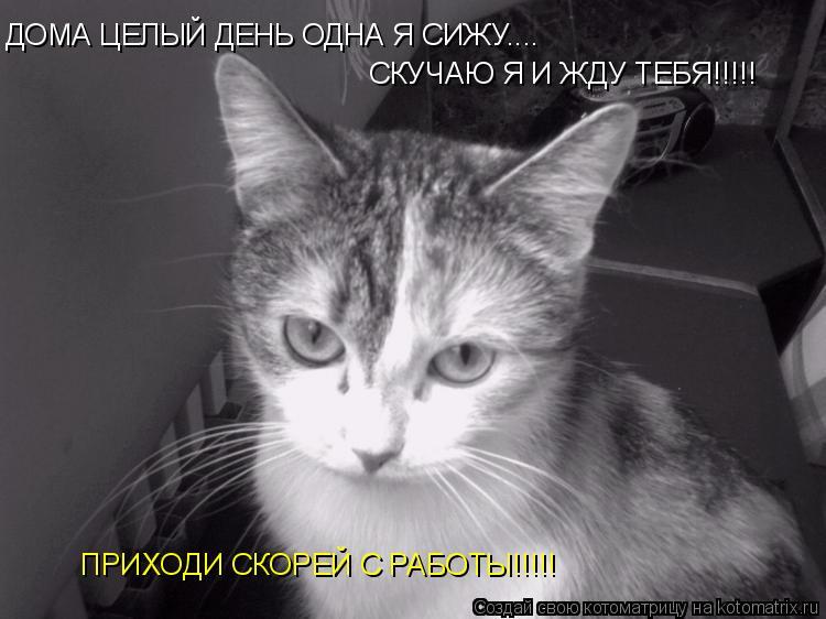 Котоматрица: ДОМА ЦЕЛЫЙ ДЕНЬ ОДНА Я СИЖУ.... СКУЧАЮ Я И ЖДУ ТЕБЯ!!!!! ПРИХОДИ СКОРЕЙ С РАБОТЫ!!!!!