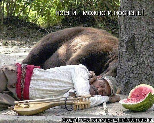 Котоматрица: поели...можно и поспать!