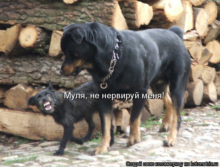 Котоматрица: Муля, не нервируй меня!