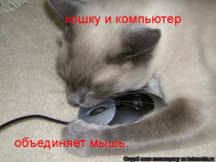 Котоматрица: кошку и компьютер  объединяет мышь.