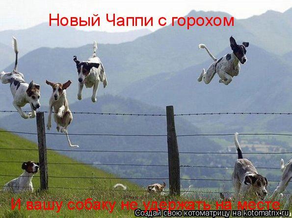 Котоматрица: Новый Чаппи с горохом И вашу собаку не удержать на месте
