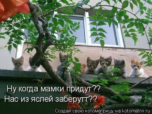 Котоматрица: Ну когда мамки придут?? Нас из яслей заберутт??