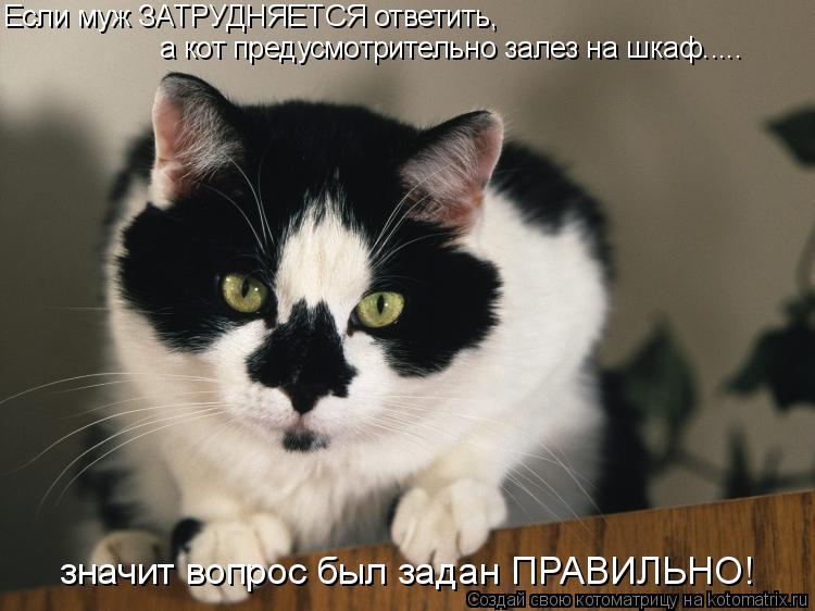 Котоматрица: Если муж ЗАТРУДНЯЕТСЯ ответить, а кот предусмотрительно залез на шкаф..... значит вопрос был задан ПРАВИЛЬНО!