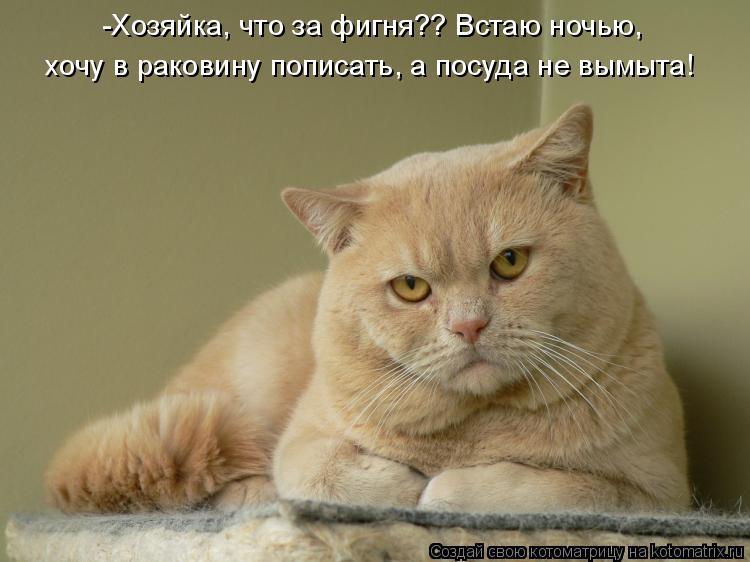 Котоматрица: -Хозяйка, что за фигня?? Встаю ночью,   хочу в раковину пописать, а посуда не вымыта!