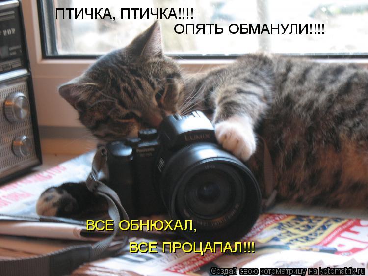 Котоматрица: ПТИЧКА, ПТИЧКА!!!! ОПЯТЬ ОБМАНУЛИ!!!! ВСЕ ПРОЦАПАЛ!!! ВСЕ ОБНЮХАЛ,