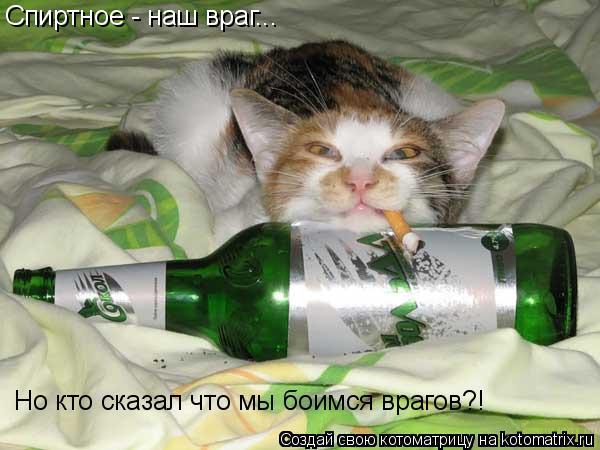 Котоматрица: Спиртное - наш враг...  Но кто сказал что мы боимся врагов?!