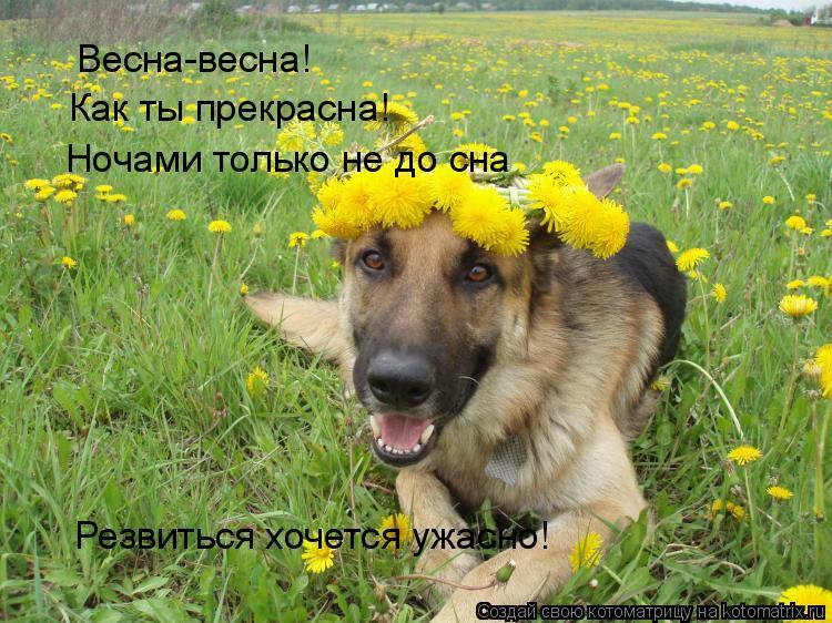 Котоматрица: Весна-весна! Как ты прекрасна! Ночами только не до сна Резвиться хочется ужасно!