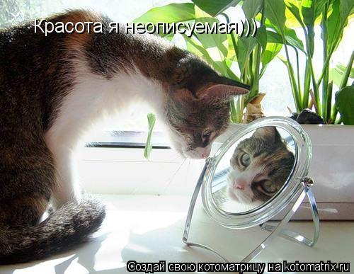 Котоматрица: Красота я неописуемая)))