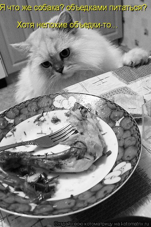 Котоматрица: Я что же собака? объедками питаться? Хотя нелохие объедки-то...