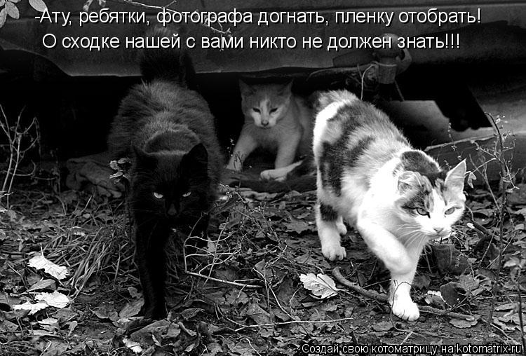 Котоматрица: -Ату, ребятки, фотографа догнать, пленку отобрать! О сходке нашей с вами никто не должен знать!!!