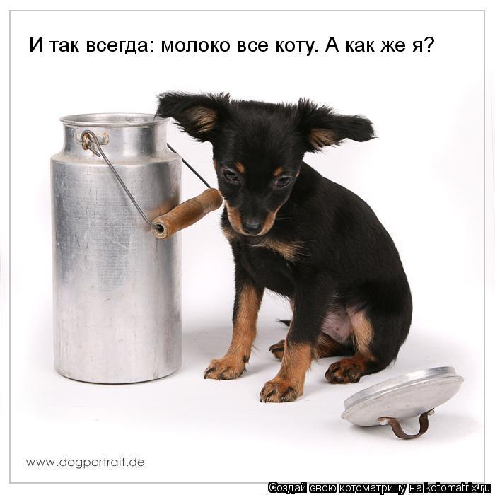 Котоматрица: И так всегда: молоко все коту. А как же я?