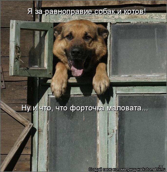 Котоматрица: Я за равноправие собак и котов!  Ну и что, что форточка маловата...