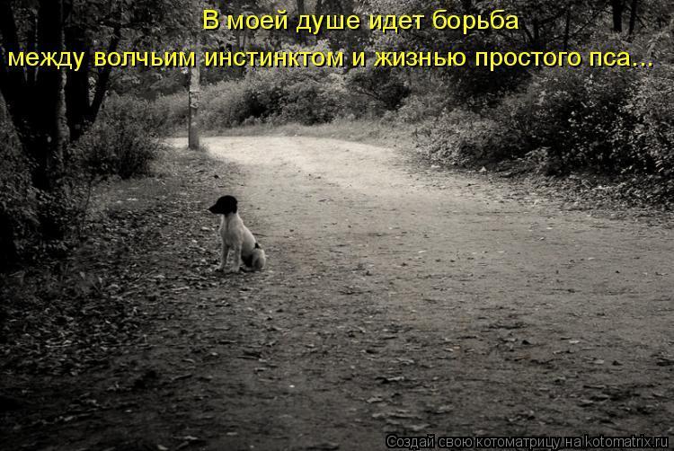 Котоматрица: В моей душе идет борьба между волчьим инстинктом и жизнью простого пса...