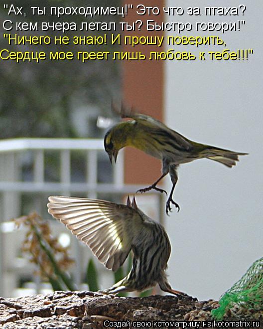 """Котоматрица: """"Ах, ты проходимец!"""" Это что за птаха?  С кем вчера летал ты? Быстро говори!"""" """"Ничего не знаю! И прошу поверить, Сердце мое греет лишь любовь к те"""