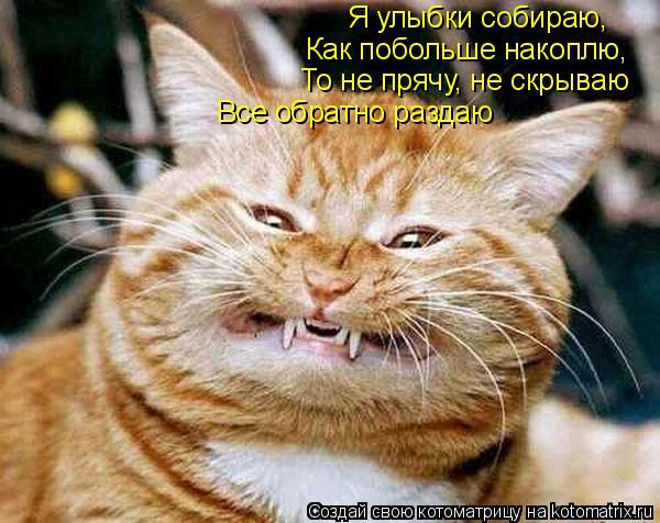 Котоматрица: Я улыбки собираю, Как побольше накоплю, То не прячу, не скрываю Все обратно раздаю