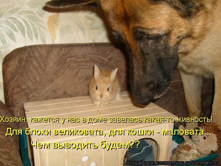 Котоматрица: Хозяин, кажется у нас в доме завелась какая-то живность! Для блохи великовата, для кошки - маловата... Чем выводить будем??
