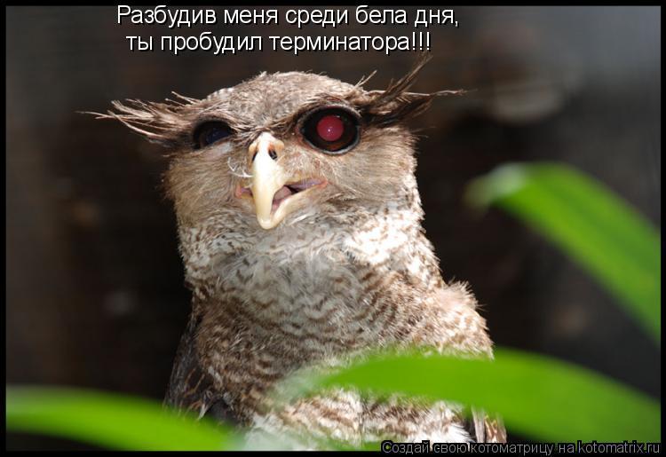 Котоматрица: Разбудив меня среди бела дня, ты пробудил терминатора!!!