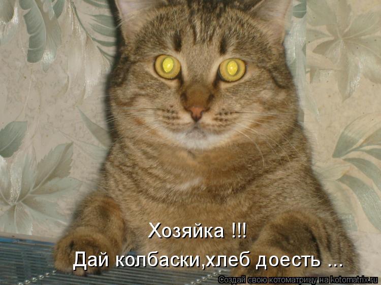 Котоматрица: Дай колбаски,хлеб доесть ... Хозяйка !!!