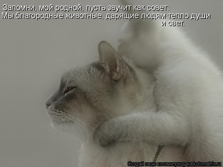 Котоматрица: Запомни, мой родной, пусть звучит как совет: Мы благородные животные, дарящие людям тепло души  и свет.