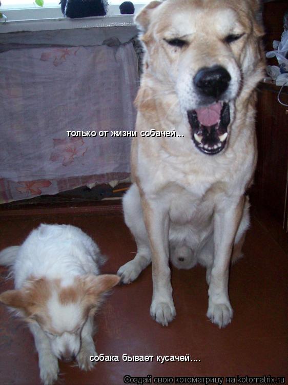 Котоматрица: собака бывает кусачей.... только от жизни собачей...