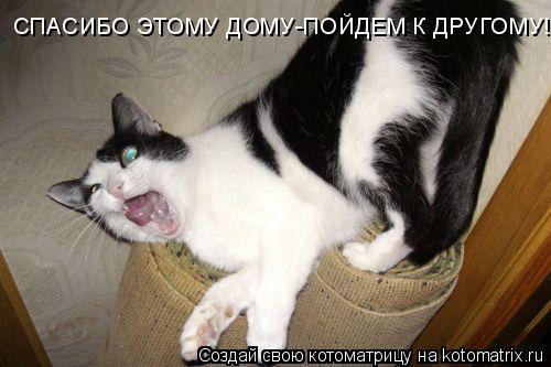 Котоматрица: СПАСИБО ЭТОМУ ДОМУ-ПОЙДЕМ К ДРУГОМУ!