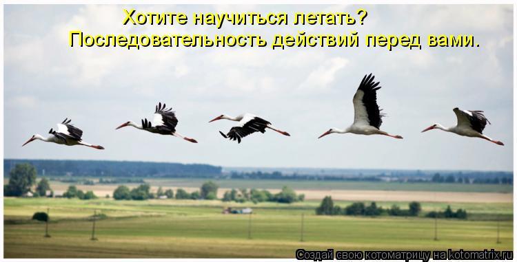 Котоматрица: Хотите научиться летать?  Последовательность действий перед вами.