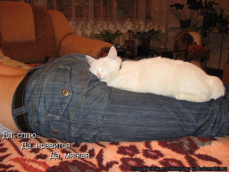 Котоматрица: Да, сплю... Да, нравится... Да, мягкая...