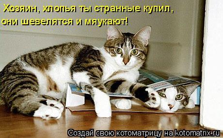 Котоматрица: Хозяин, хлопья ты странные купил, они шевелятся и мяукают!