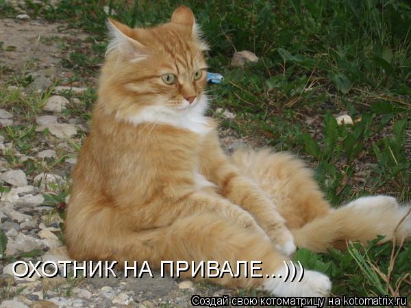 Котоматрица: ОХОТНИК НА ПРИВАЛЕ...)))