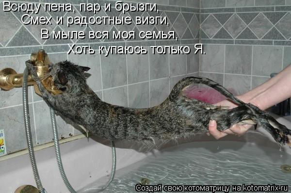 Котоматрица: Всюду пена, пар и брызги,  Смех и радостные визги,  В мыле вся моя семья,  Хоть купаюсь только Я.