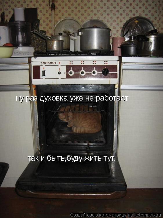 Котоматрица: ну раз духовка уже не работает так и быть,буду жить тут.