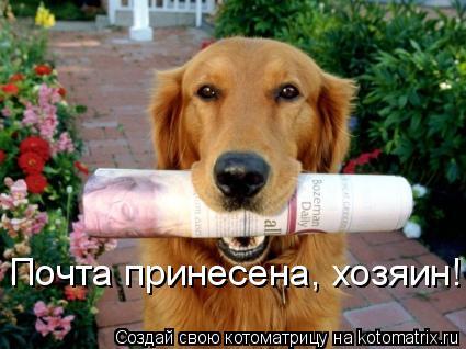 Котоматрица: Почта принесена, хозяин!