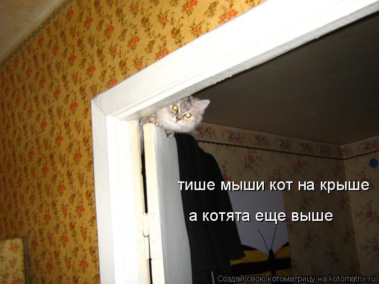 Тише мыши кот на крыши а котята еще выше