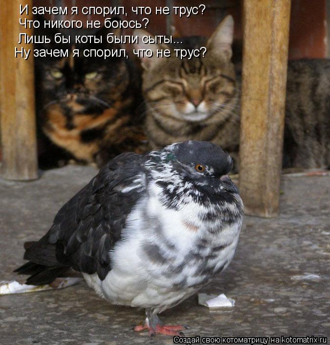 Котоматрица: И зачем я спорил, что не трус?  Что никого не боюсь? Лишь бы коты были сыты... Ну зачем я спорил, что не трус?