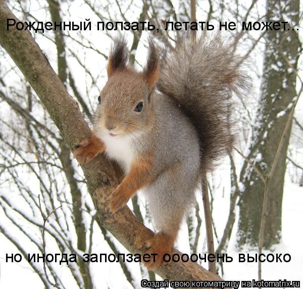 Котоматрица: Рожденный ползать, летать не может... но иногда заползает оооочень высоко