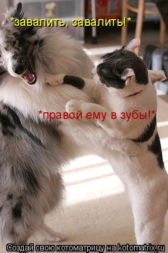 Котоматрица: *правой ему в зубы!* *завалить, завалить!*