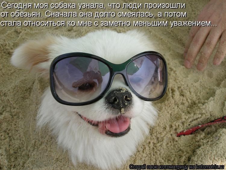 Котоматрица: Сегодня моя собака узнала, что люди произошли от обезьян. Сначала она долго смеялась, а потом стала относиться ко мне с заметно меньшим уваж