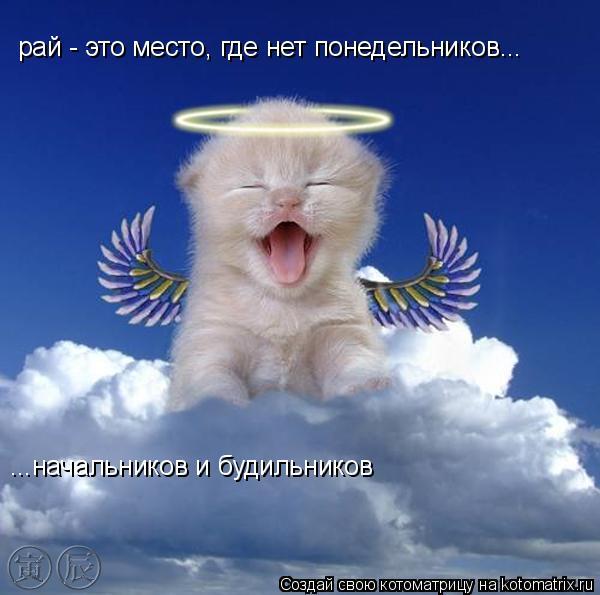 Котоматрица: рай - это место, где нет понедельников... ...начальников и будильников